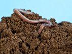 ready mix soil ছাদ বাগানের মাটি