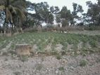 Land for sell on Halishahar