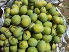 10th Rajshahi হিমসাগর মিষ্টি আমের মেলা sylhet