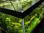 live planted aquarium