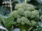 Broccoli Seeds - ব্রকলি সবজির বীজ