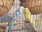 full setup soho bird