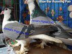ব্লু বার লাহোর রানিং জোড়া (Blue Bar Lahore Running Pair)