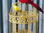 Bird Cage with Two artificial For Home Decoration
