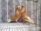 kepochin baby pair