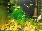 1 feet aquarium,Full setup with fish food and plant!