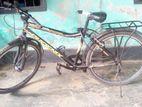 Bicycle Phoniex