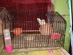 পাখির খাঁচা Cage