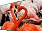Brand New with warranty 55 Inch KD-X8000H Sony TV