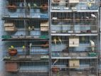 "Bird cage for sell... 18""-36"", 2unit, ৪ তলা বিশিষ্ঠ, ২টি খাচা।"