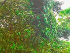 ফরমালিনমুক্ত আমরু পালি আম কিনতে যোগাযোগ করুন এই নাম্বারে 01303656769