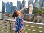 Amazing Singapore Tourist Visa Service