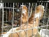 PIGEONS 5pair