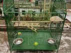 Parrot playing Cage (খাঁচা - khaca)