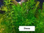 Aquarium Plants - জীবন্ত গাছ