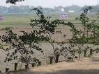 Land Project Of Shopan Dokhina City