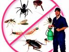 Pest Control Services - উইপোকা,তেলাপোকা,ছাড়পোকা দমন করা হয়।