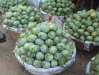 10th হিমসাগর মিষ্টি আমের মেলা Rajshahi