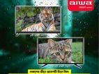 """N.B. Aiwa 32"""" Smart LED TV"""